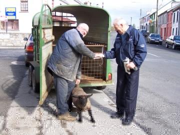 Sale agreed! Sean McGath sells a lamb to John Muldoon